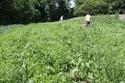 くり坊農園の畑