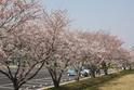 春の河合運動広場
