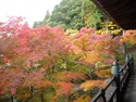 播州清水寺 紅葉見ごろです